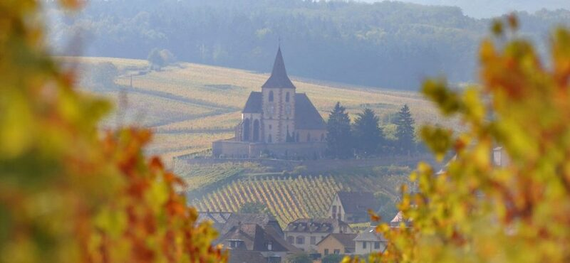 Trimbach Clos Sainte Hune: The World's Best Dry Riesling   Quill & Pad